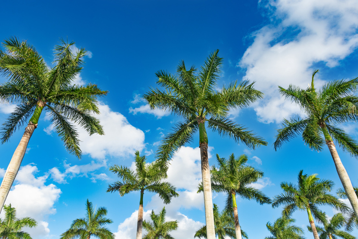 Florida testamentary trust